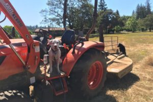 Zap Haul Landscape Grading with Marley